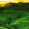 Malino Highlands dengan Keindahan Kebun Teh